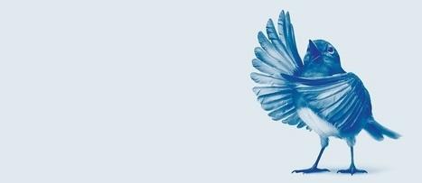 Comparer Twitter à Facebook, Instagram et consorts n'a pas de sens | La Lorgnette | Scoop.it