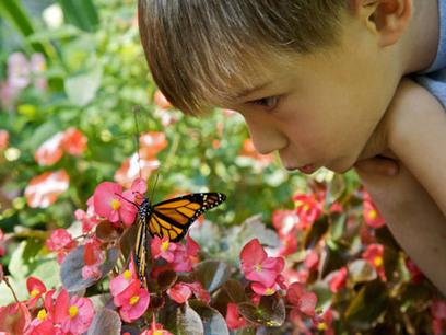 Citizen scientists can help monarch butterflies | Open Science for Development | Scoop.it