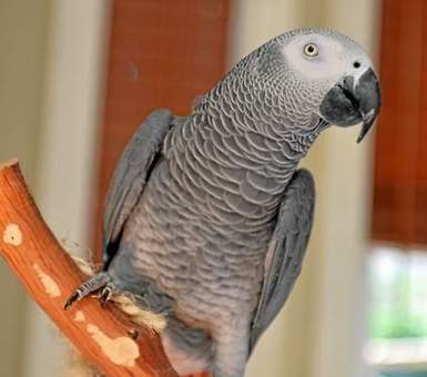 Talking parrot missing for 4 years found, now speaks Spanish   Apprendre l'anglais   Scoop.it