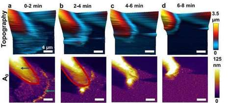 Atomic force microscope advance leads to new breast cancer research - Phys.Org | Breast Cancer News | Scoop.it