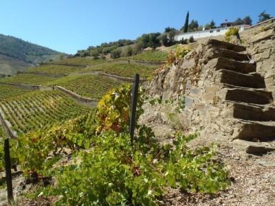 Daniel in the Douro (part 1) | Enotria | Wine business | Scoop.it