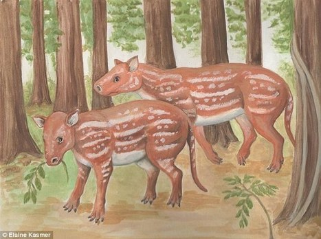 Fossil reveals ancient relative of horses and rhinos lived 54.5m years ago   Geology   Scoop.it