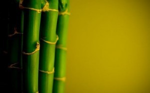 Taking Leadership Cues from Bamboo | Wendy Appel | Leading Choices | Scoop.it