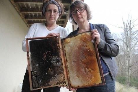 Charente et Charente-Maritime : c'est l'hécatombe dans les ruches d'abeilles | Abeilles, intoxications et informations | Scoop.it