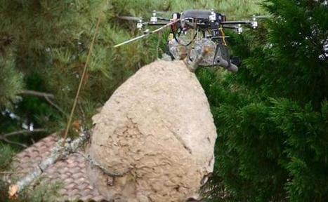 Un drone chasseur de frelon asiatique | Abeilles, intoxications et informations | Scoop.it