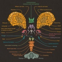 Mind Blown: An Exploded View of The Human Brain | Visual.ly | Awesome ReScoops | Scoop.it