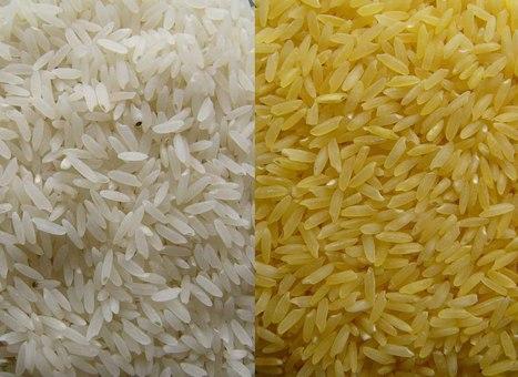 Greenpeace y el arroz dorado: ¿un genocidio silencioso? | Pseudociencias, bulos y mitos | Scoop.it