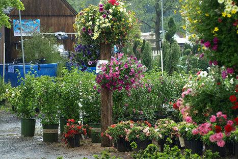 : Winterberry Garden Center & Showroom : 860/378.0071 :   Annie Haven   Haven Brand   Scoop.it