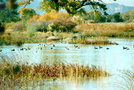 allAfrica.com: Africa: Vital Economic and Environmental Role of Wetlands Must Be Recognized to Avoid Further Degradation and Losses   Earth Citizens Perspective   Scoop.it