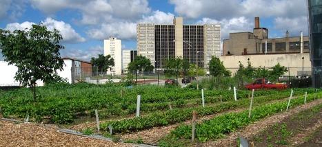 40% des terres cultivées dans le monde sont dans ou à proximité des villes   urbanisme et développement rural   Scoop.it