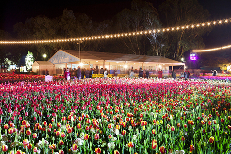 Canberra Floriade Coach Tour from Sydne | tamm11ht | Scoop.it
