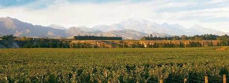 Kiwis Chasing Down French at UK Wine's Top End | Vitabella Wine Daily Gossip | Scoop.it
