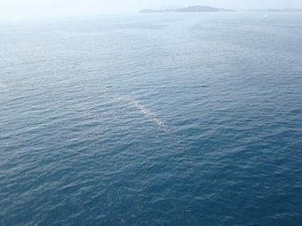 Pollution à la paraffine en mer au Pradet | Toxique, soyons vigilant ! | Scoop.it