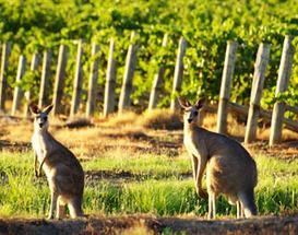 Australia's inner-most wine habits revealed | Autour du vin | Scoop.it