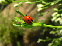 Plant These Herbs & Veggies to Attract Beneficial Insects to Your Urban Garden | Urban Organic Gardener | Mom Ed | Scoop.it