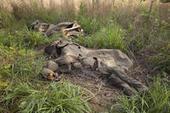 Le Cameroun au secours des éléphants, après des mois de massacre / Actualités / S'informer - WWF France | écolo | Scoop.it
