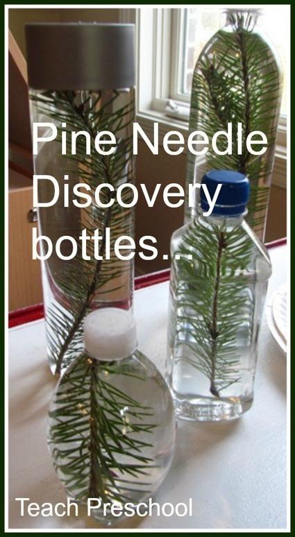 A pine needle in a bottle | Learn through Play - pre-K | Scoop.it