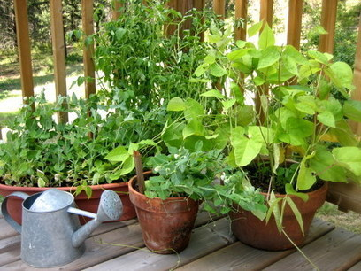 Container Gardening-15 best vegetables that grow well in a container or pot | The Self-Sufficient Living | Think Like a Permaculturist | Scoop.it