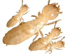 Termite Control Delhi NCR | Pest Control Services Delhi NCR | Scoop.it