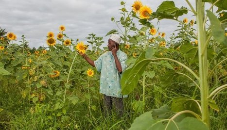 Why the Future Is Bright for the World's Poorest Farmers - Bill Gates | Plant science | Scoop.it
