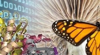 Ewan's Blog: Bioinformatician at large: Sharing clinical data: everyone wins | Bioinformatics, Comparative Genomics and Molecular Evolution | Scoop.it