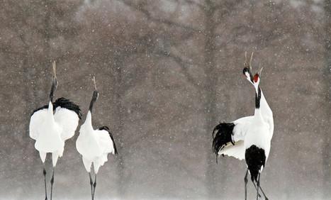 Las aves, mensajeras del cambio climático / Noticias / SINC | Educacion, ecologia y TIC | Scoop.it