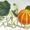 Alimentation Santé Environnement