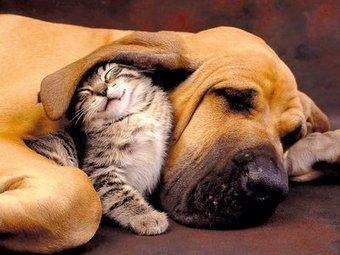 Comme chiens et chats! | Edenzo - L'information et l'actualité des chiens et chats | Edenzo.com | Scoop.it