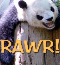 How Google's Panda Update Impacted Squidoo and Hubpages Traffic | Best Squidoo | Scoop.it