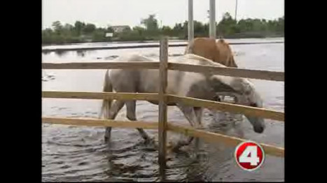 Horses' health at risk after Tropical Storm Debby (news video) - WFTX-TV Florida | The Jurga Report: Horse Health, Welfare, and Care | Scoop.it