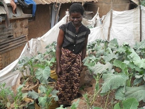 Slum Farmers Rise Above the Sewers | Inter Pres... | Youth, Agriculture and Food Security | Scoop.it
