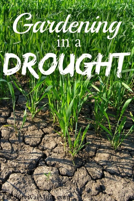 Gardening in a drought - Survival Mom | Gardens and Gardening | Scoop.it