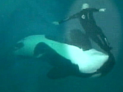 Sea World Trainer Survives Whale Attack (VIDEO) | Gen's Rea: Crime & Punishment | Scoop.it