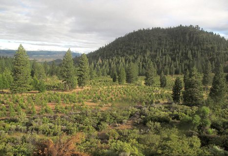 5 Successful Reforestation Projects   Community Forestry   Scoop.it