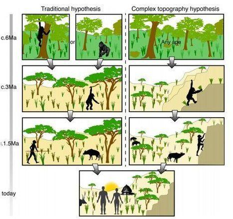 El bipedismo pudo empezar en el paisaje agreste africano como respuesta al terreno | Arqueología, Historia Antigua y Medieval - Archeology, Ancient and Medieval History byTerrae Antiqvae (Blogs) | Scoop.it