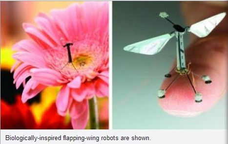 Nature inspires drones of the future | 21st Century Innovative Technologies and Developments as also discoveries, curiosity ( insolite)... | Scoop.it