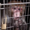 Air France Flies Monkeys to Their Deaths | Nature Animals humankind | Scoop.it