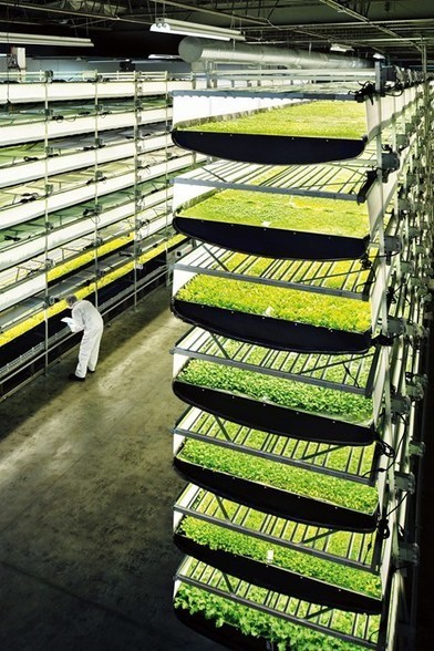 Aerofarm has built the world's largest vertical farm | Food & Drink Innovation | Scoop.it