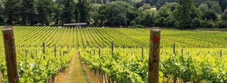 Climate Change Sends Wine Growing North | Vitabella Wine Daily Gossip | Scoop.it