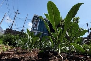 L'agriculture urbaine : un phénomène mondial | Agriculture urbaine et rooftop | Scoop.it