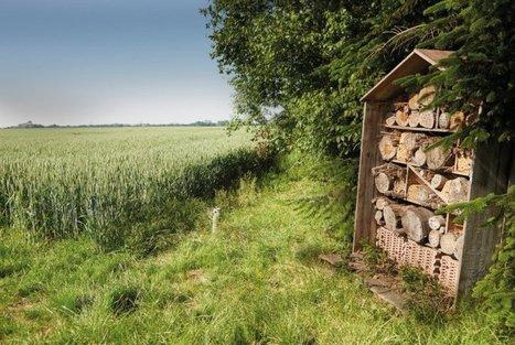 Bayer rückt Nachhaltigkeit in den Vordergrund | Agrarforschung | Scoop.it