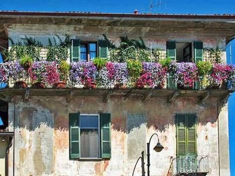 Fiori da balcone e giardino per i mesi estivi - Fiori da giardino estivi ...