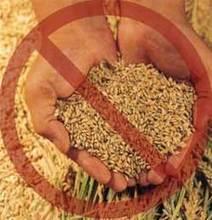 Celiachia: la causa nella modifica del frumento - RicetteOk.it | Celiachia | Scoop.it