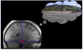 Memory Replay Prioritizes High-Reward Memories | Linguagem Virtual | Scoop.it