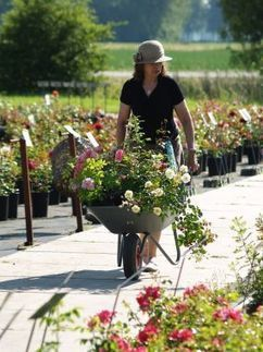Be Sure To Catch The Fall Rose Sales - Fine Gardening | Annie Haven | Haven Brand | Scoop.it
