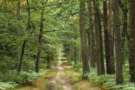 La filière bois appelle à l'aide pour reboiser | Filière bois - général | Scoop.it