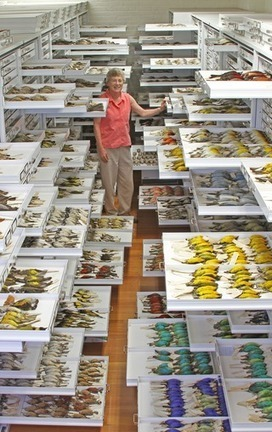 PLOS Biology: Evolutionary Biology for the 21st Century | hfr | Scoop.it