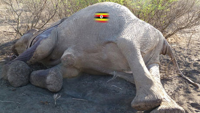2011: Worst year for Uganda's wildlife | Wildlife Trafficking: Who Does it? Allows it? | Scoop.it