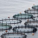 New Chilean Law Ensures Sustainable Fishing, Aq... | Aquaculture (Global Aqua Link) | Scoop.it