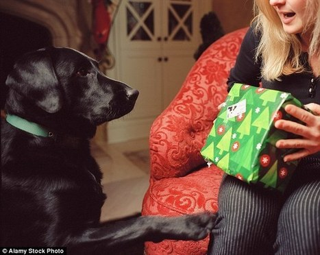 95% of Americans reveal they buy Christmas gifts for their pets | Kickin' Kickers | Scoop.it